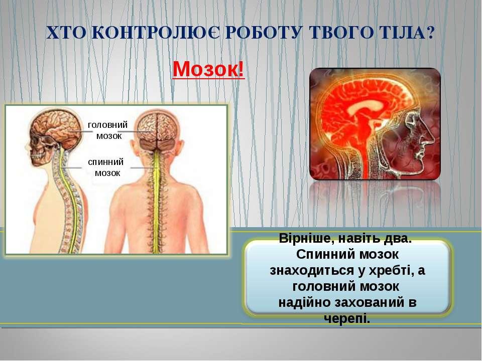 Мозок! головний мозок спинний мозок ХТО КОНТРОЛЮЄ РОБОТУ ТВОГО ТІЛА?