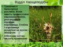 Відділ Хвощеподібні Травянисті багаторічні рослини. Вони мають прямостояче на...