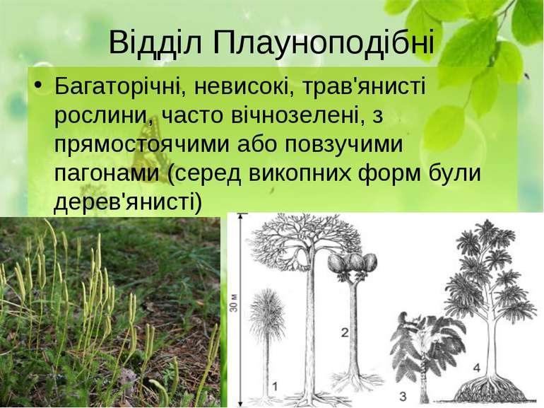 Відділ Плауноподібні Багаторічні, невисокі, трав'янисті рослини, часто вічноз...