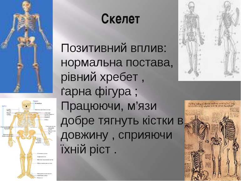Скелет Позитивний вплив: нормальна постава, рівний хребет , гарна фігура ; Пр...