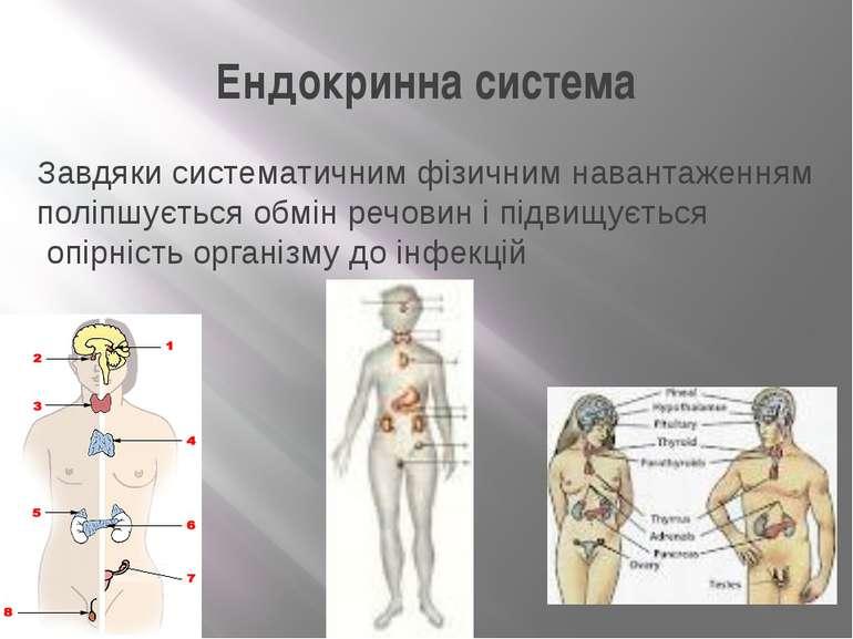 Ендокринна система Завдяки систематичним фізичним навантаженням поліпшується ...