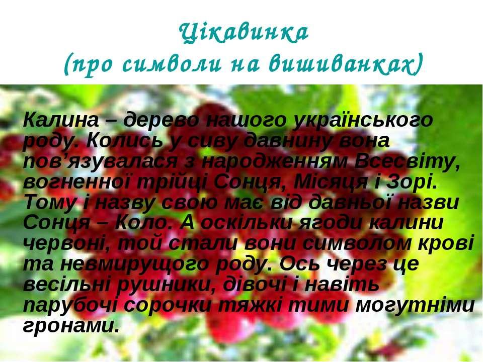 Цікавинка (про символи на вишиванках) Калина – дерево нашого українського род...