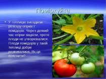 Поміркуйте У теплицю висадили розсаду огірків і помідорів. Через деякий час о...