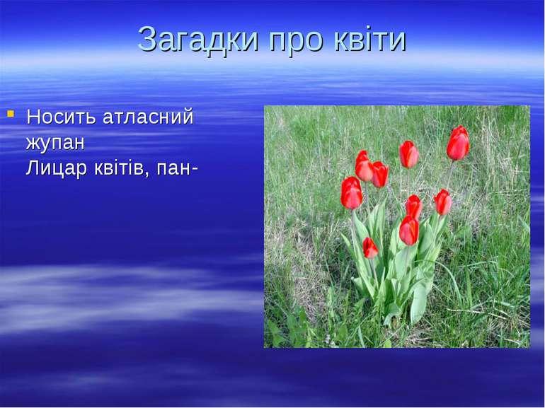 Носить атласний жупан Лицар квітів, пан- Загадки про квіти