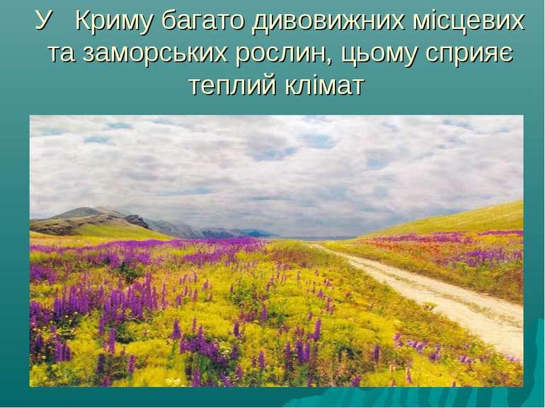 У Криму багато дивовижних місцевих та заморських рослин, цьому сприяє теплий ...