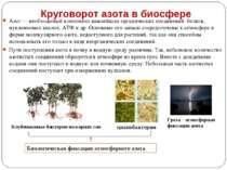 Круговорот азота в биосфере Азот — необходимый компонент важнейших органическ...