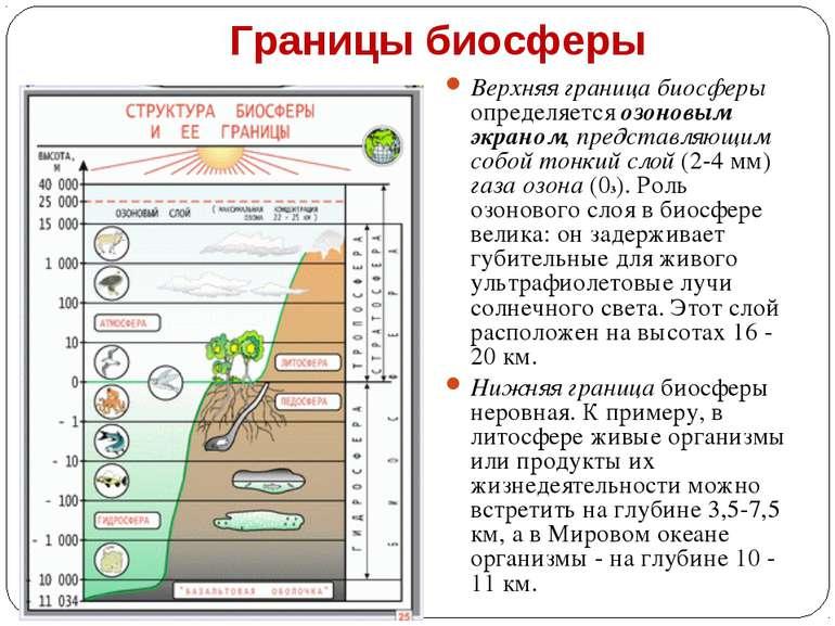 Границы биосферы Верхняя граница биосферы определяется озоновым экраном, пред...