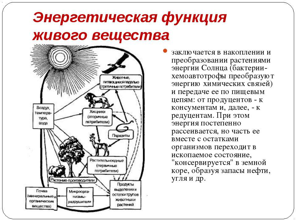 Энергетическая функция живого вещества заключается в накоплении и преобразова...