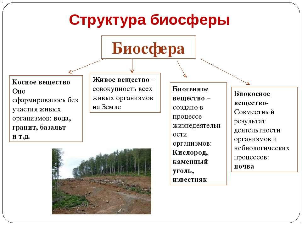 Структура биосферы Биосфера Косное вещество Оно сформировалось без участия жи...