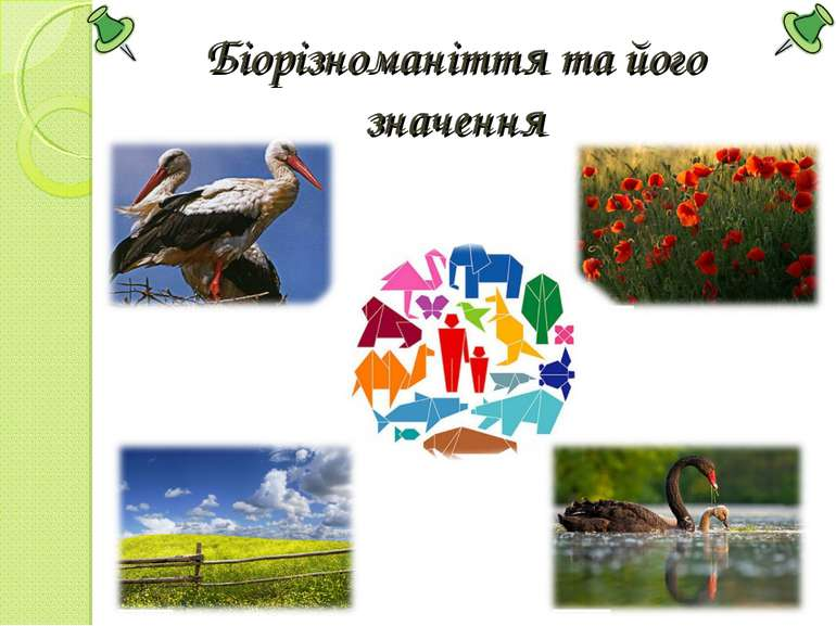 Біорізноманіття та його значення