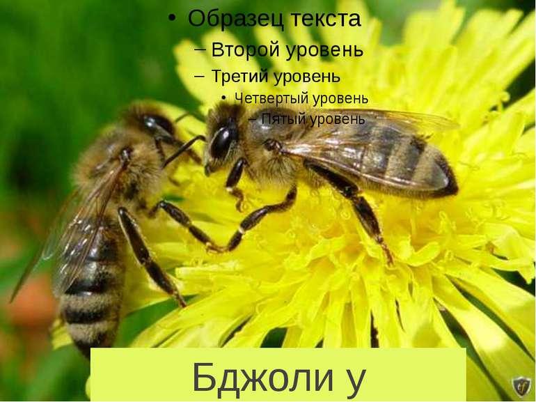 Бджоли у клопотах,