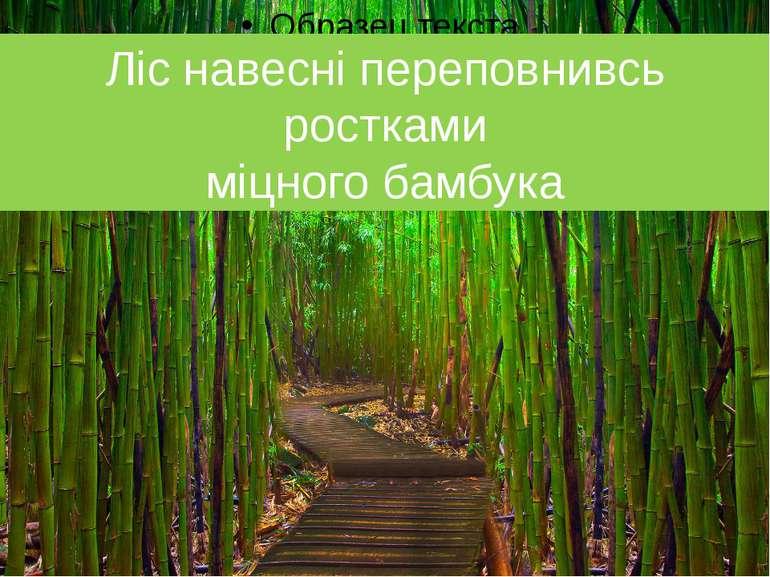 Ліс навесні переповнивсь ростками міцного бамбука