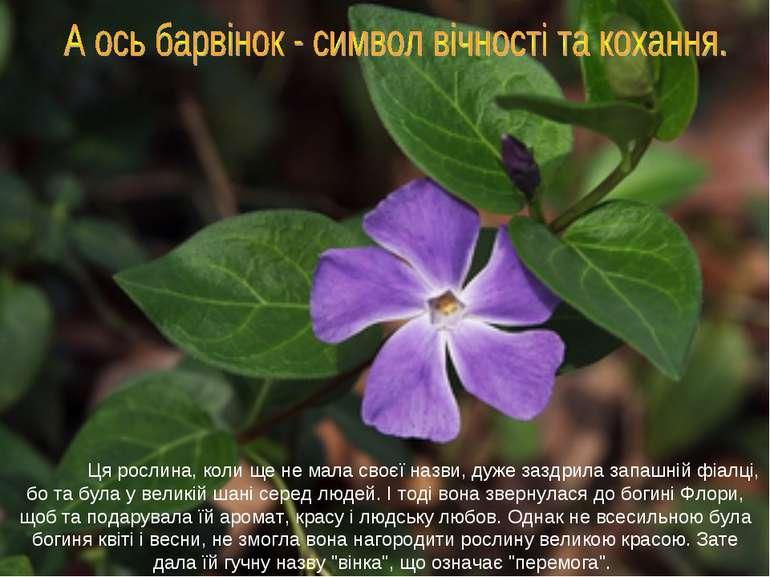 Ця рослина, коли ще не мала своєї назви, дуже заздрила запашній фіалці, бо та...