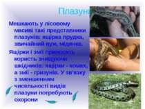 Плазуни Мешкають у лісовому масиві такі представники плазунів: ящірка прудка,...