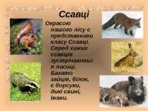 Ссавці Окрасою нашого лісу є представники класу Ссавці. Серед хижих ссавців з...