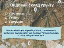 Видовий склад ґрунту Підстилка Ґрунт. Підґрунт. 1 Велика кількість коренів ро...