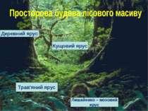 Деревний ярус Кущовий ярус Трав'яний ярус Лишайнико – моховий ярус