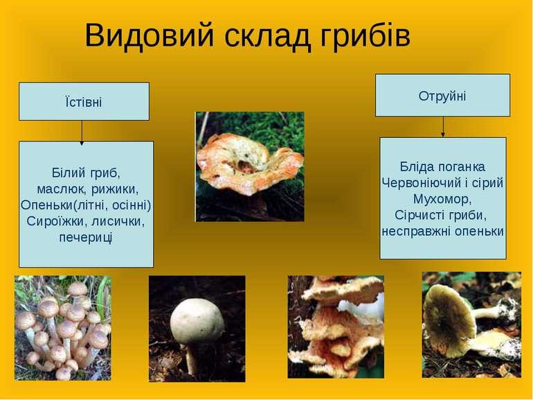 Видовий склад грибів Їстівні Отруйні Білий гриб, маслюк, рижики, Опеньки(літн...