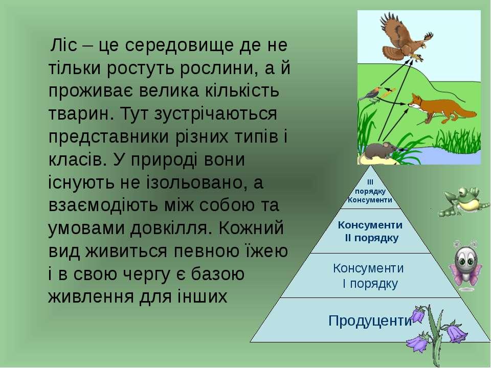 Ліс – це середовище де не тільки ростуть рослини, а й проживає велика кількіс...