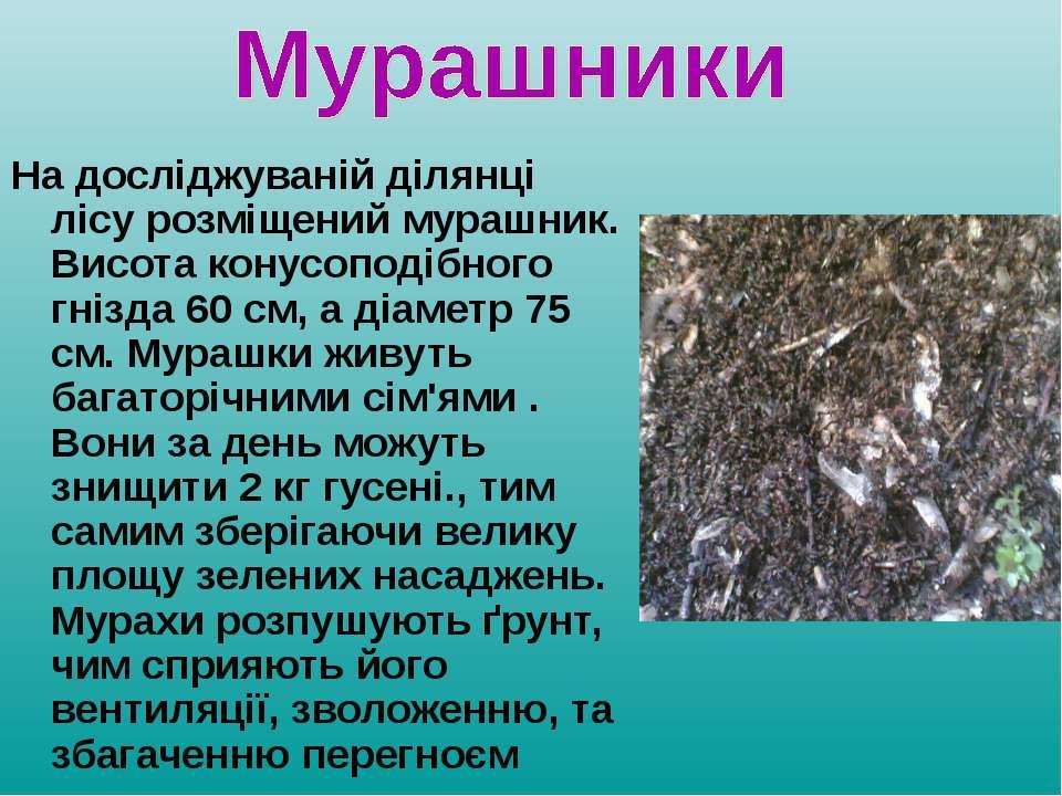 На досліджуваній ділянці лісу розміщений мурашник. Висота конусоподібного гні...