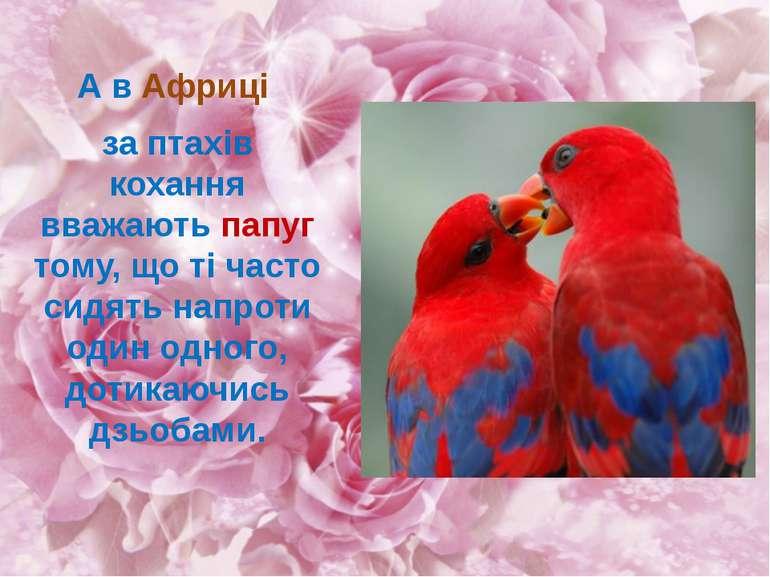 А в Африці за птахів кохання вважають папуг тому, що ті часто сидять напроти ...