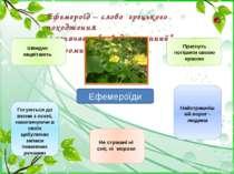 """Ефемероїд – слово грецького походження і означає """" швидкоплинний"""", """"скоромину..."""