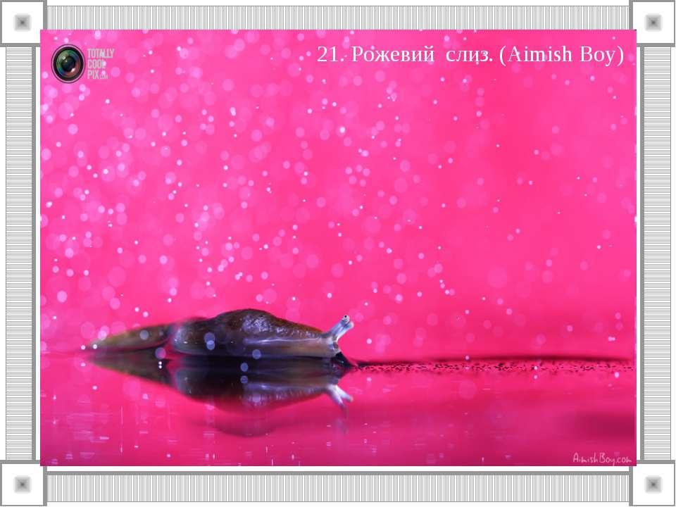 21. Рожевий слиз. (Aimish Boy)