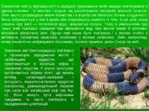 Символізм змії (у відповідності із середою проживання змій) завжди пов'язував...