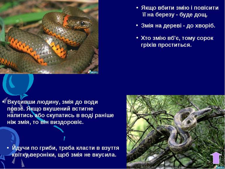 Якщо вбити змію і повісити її на березу - буде дощ. Змія на дереві - до хворі...