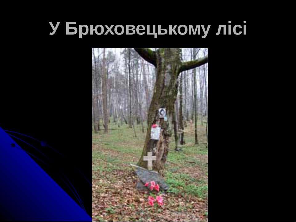 У Брюховецькому лісі
