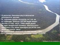 В джунглях Амазонки росте величезне різноманіття рослин. За оцінками деяких е...