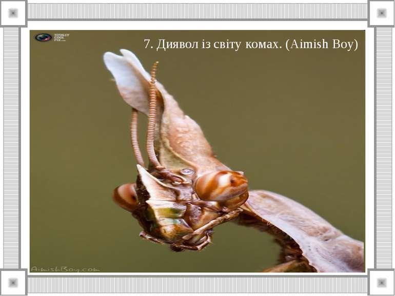 7. Диявол із світу комах. (Aimish Boy)