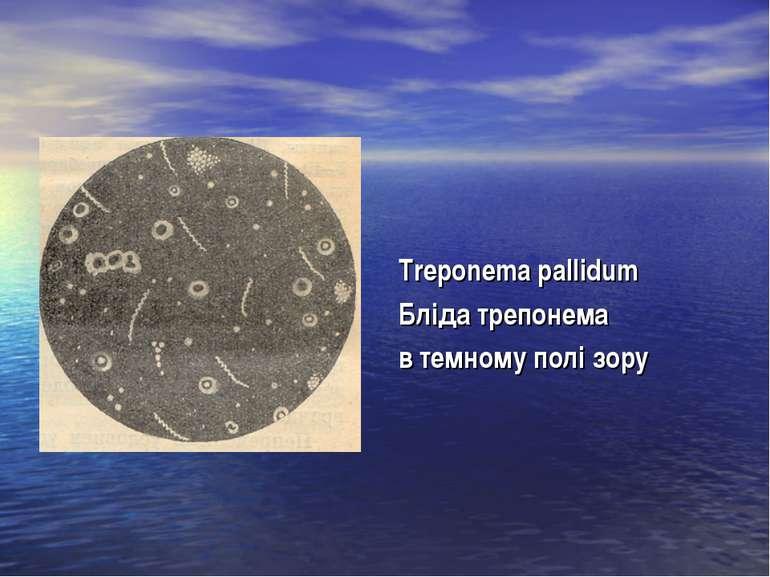 Treponema pallidum Бліда трепонема в темному полі зору