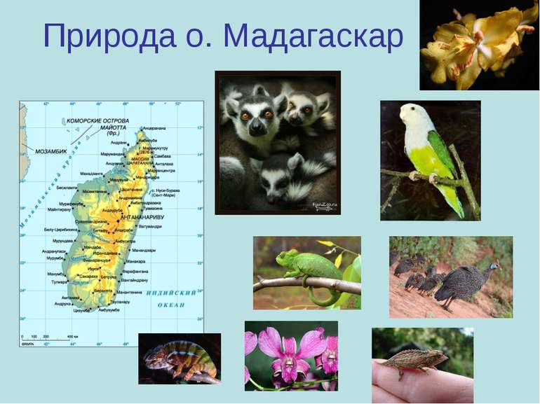 Природа о. Мадагаскар