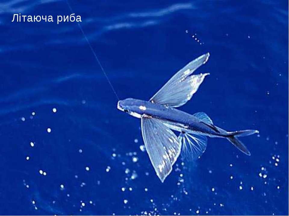 Літаюча риба