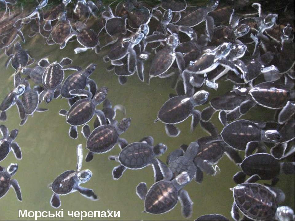 Морські черепахи