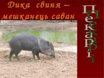 Дика свиня – мешканець саван