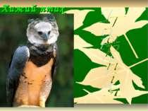 Хижий птах Амазонії