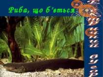 Риба, що б'ється током