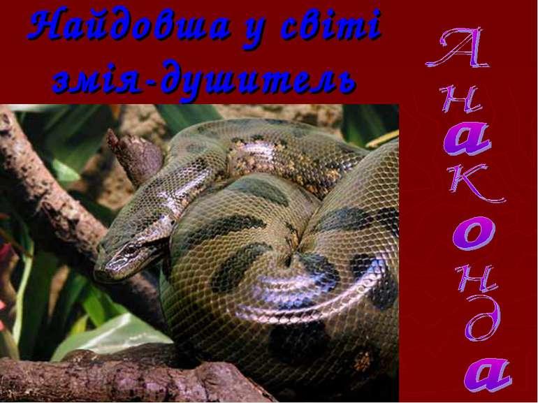 Найдовша у світі змія-душитель