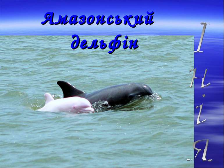Амазонський дельфін