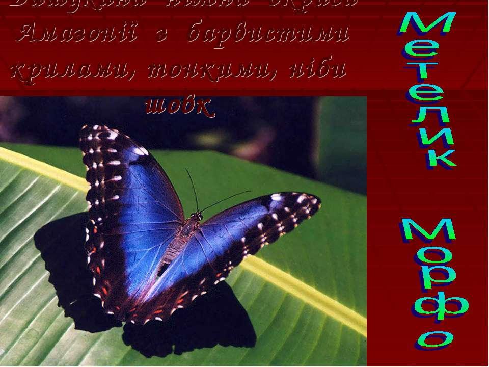 Вишукана ніжна окраса Амазонії з барвистими крилами, тонкими, ніби шовк