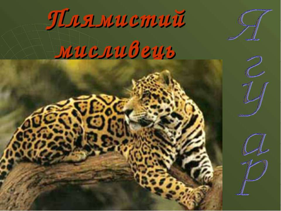 Плямистий мисливець