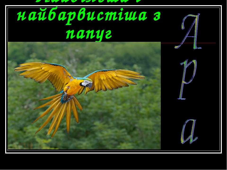Найбільша і найбарвистіша з папуг
