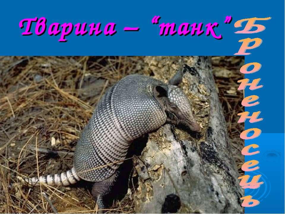 """Тварина – """"танк"""""""