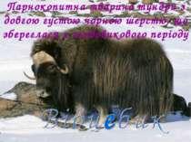 Парнокопитна тварина тундри з довгою густою чорною шерстю, що збереглася з ль...