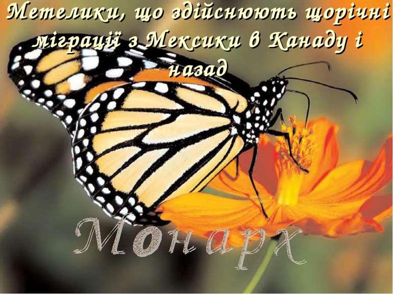 Метелики, що здійснюють щорічні міграції з Мексики в Канаду і назад
