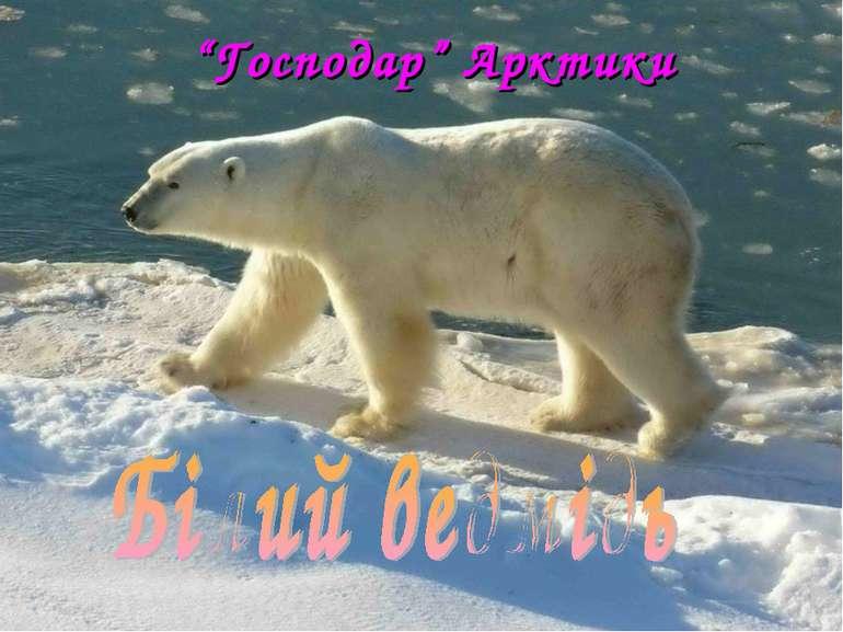 """""""Господар"""" Арктики"""