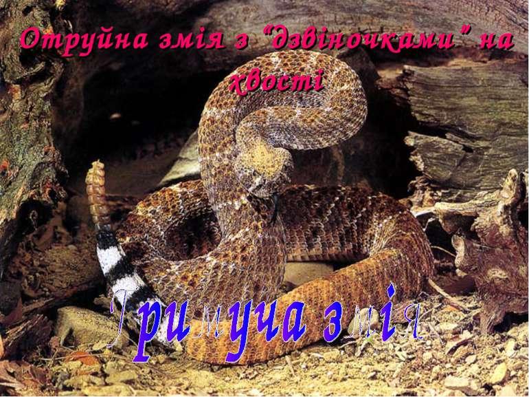 """Отруйна змія з """"дзвіночками"""" на хвості"""