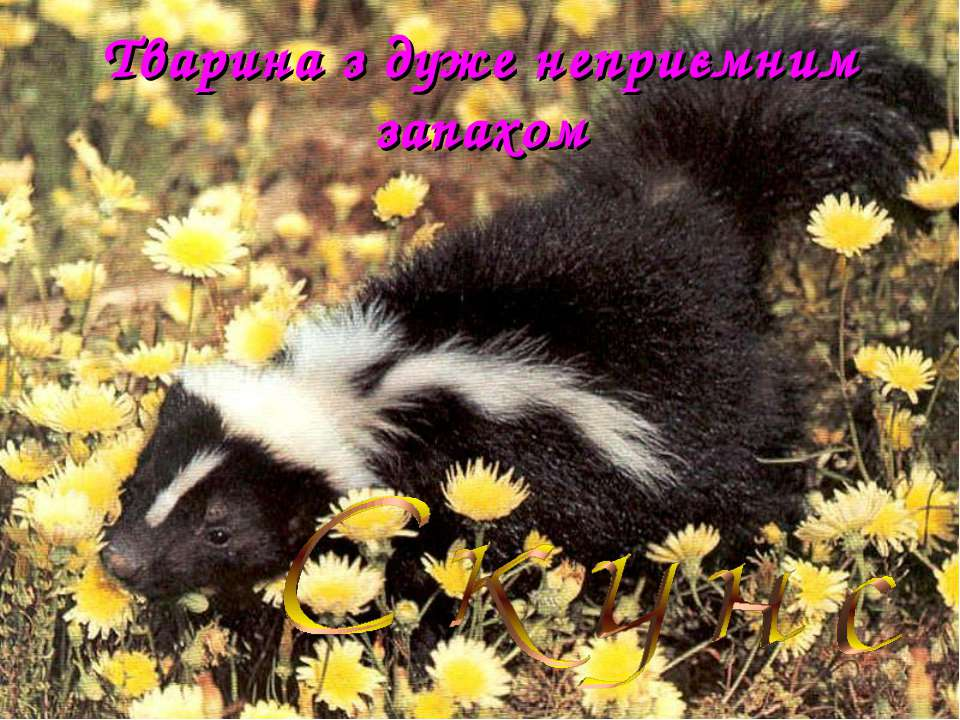 Тварина з дуже неприємним запахом